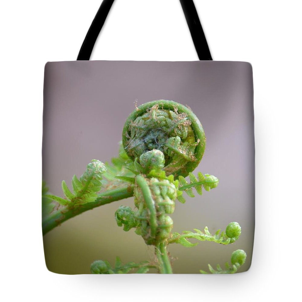 A Fiddlehead Abstract Tote Bag featuring the photograph A Fiddlehead Abstract by Maria Urso