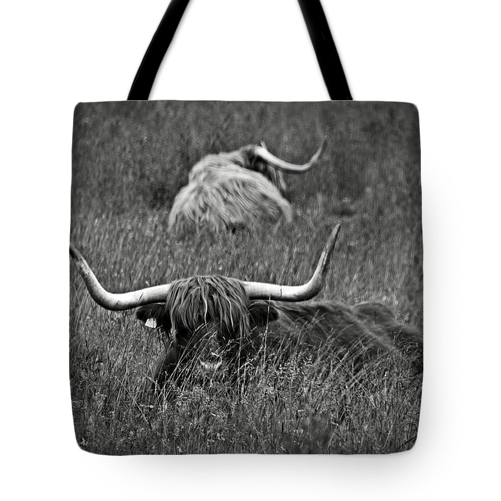 Bw Tote Bag featuring the photograph A Highland Cattle In The Scottish Highlands by RicardMN Photography