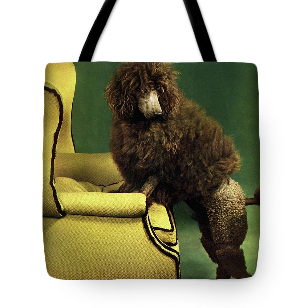 Illustration Tote Bag featuring the photograph A House And Garden Cover Of A Poodle by Anton Bruehl