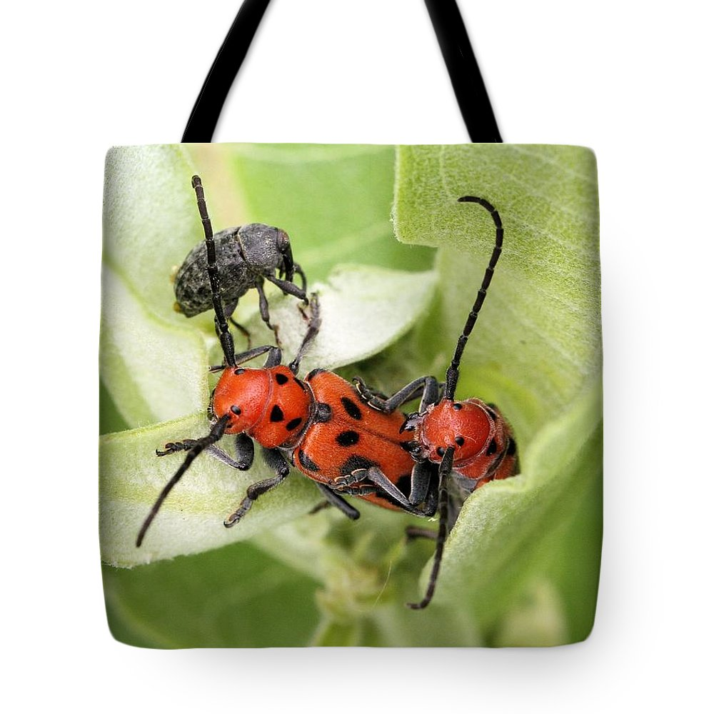 Red Milkweed Beetle Tote Bag featuring the photograph A Little Crowded by Doris Potter