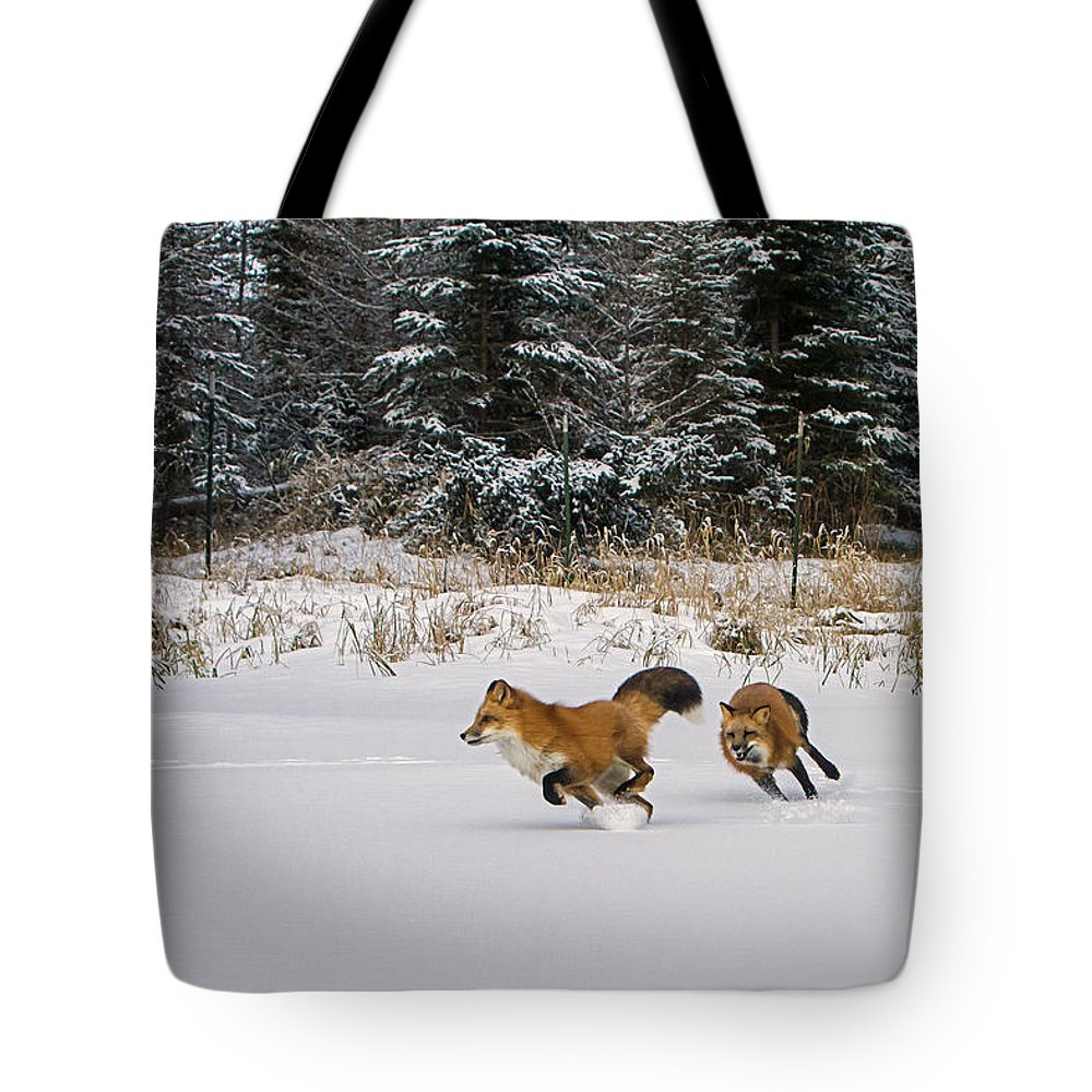 Red Fox Tote Bag featuring the photograph A Morning Run by Jack Bell