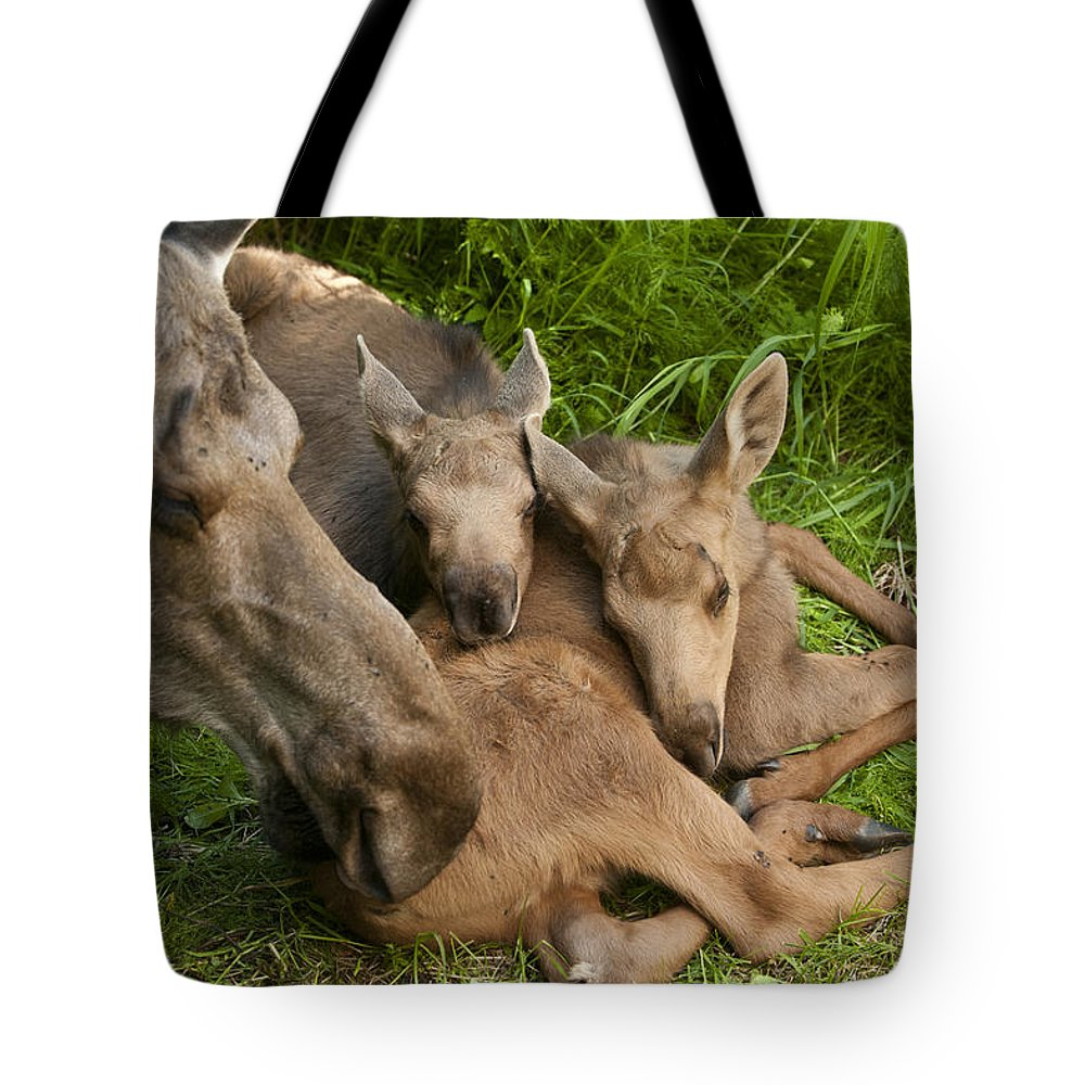 Moose Tote Bag featuring the photograph A Mothers Love by Ted Raynor