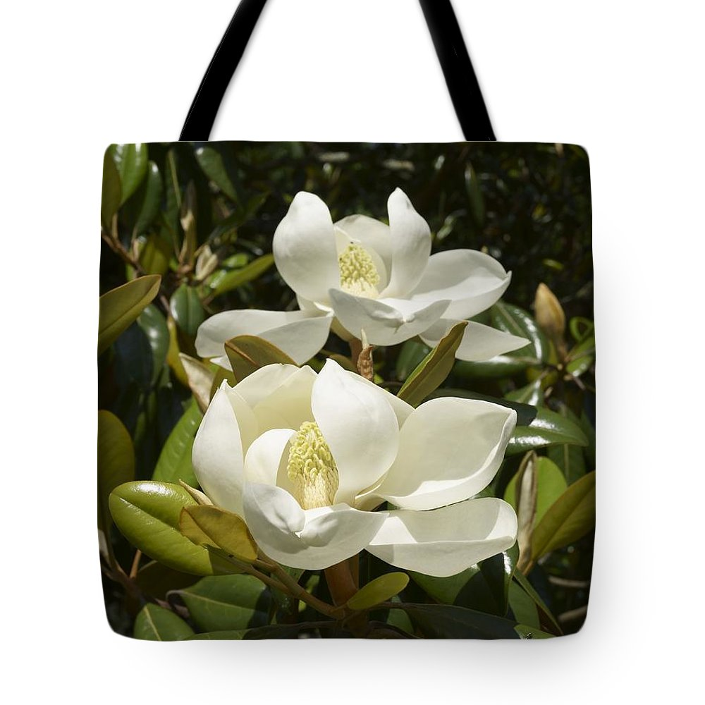 Magnolia Tote Bag featuring the photograph A Pair Of Southern Magnolia Blossoms by MM Anderson