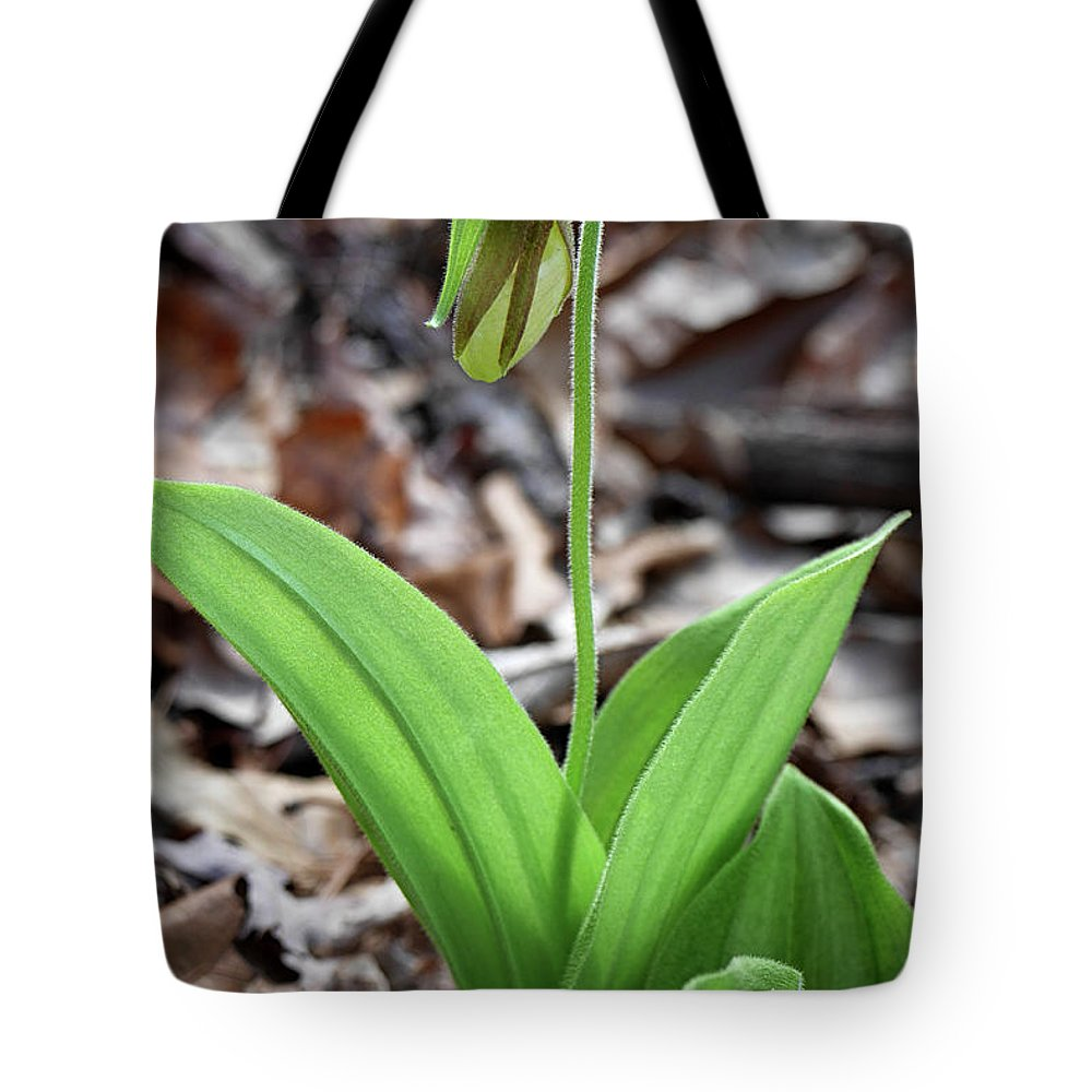 Day Tote Bag featuring the photograph A Pink Ladys Slipper Orchid Prepares by Al Petteway & Amy White