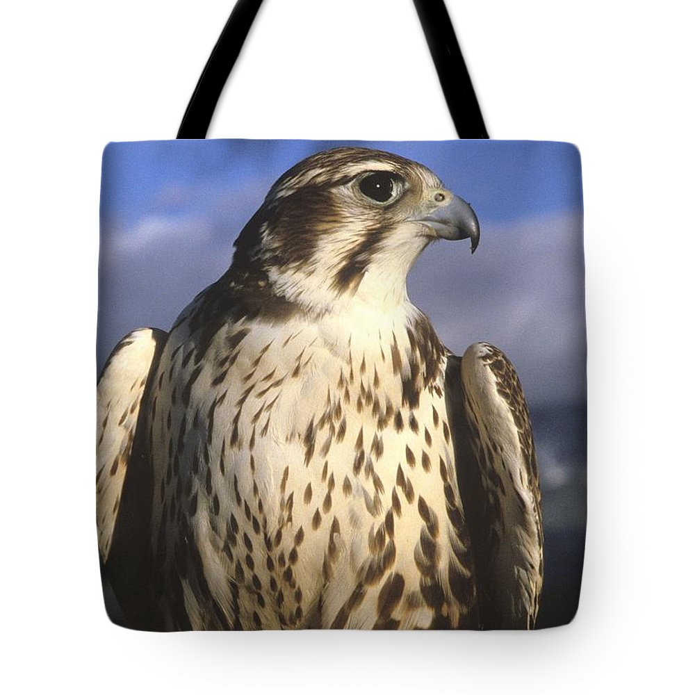 Falcon Tote Bag featuring the photograph A Prairie Falcon At Dusk by Larry Allan