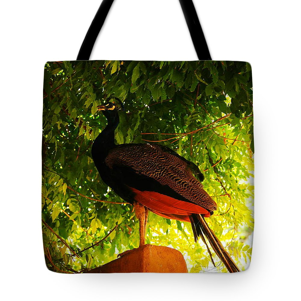 Birds Tote Bag featuring the photograph A Proud Peakcock by Jeff Swan