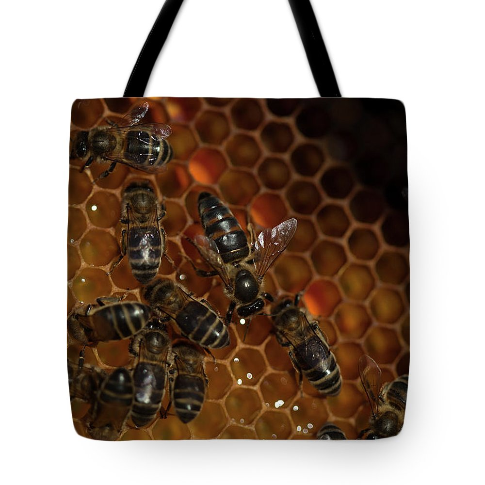 Worker Bees Tote Bag featuring the photograph A Queen Bee Walks In The Center by Chico Sanchez