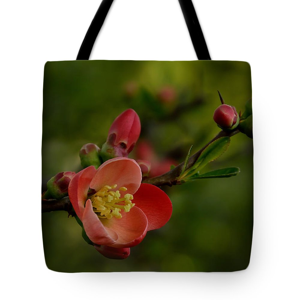 White Tote Bag featuring the photograph A Red Flower by TouTouke A Y