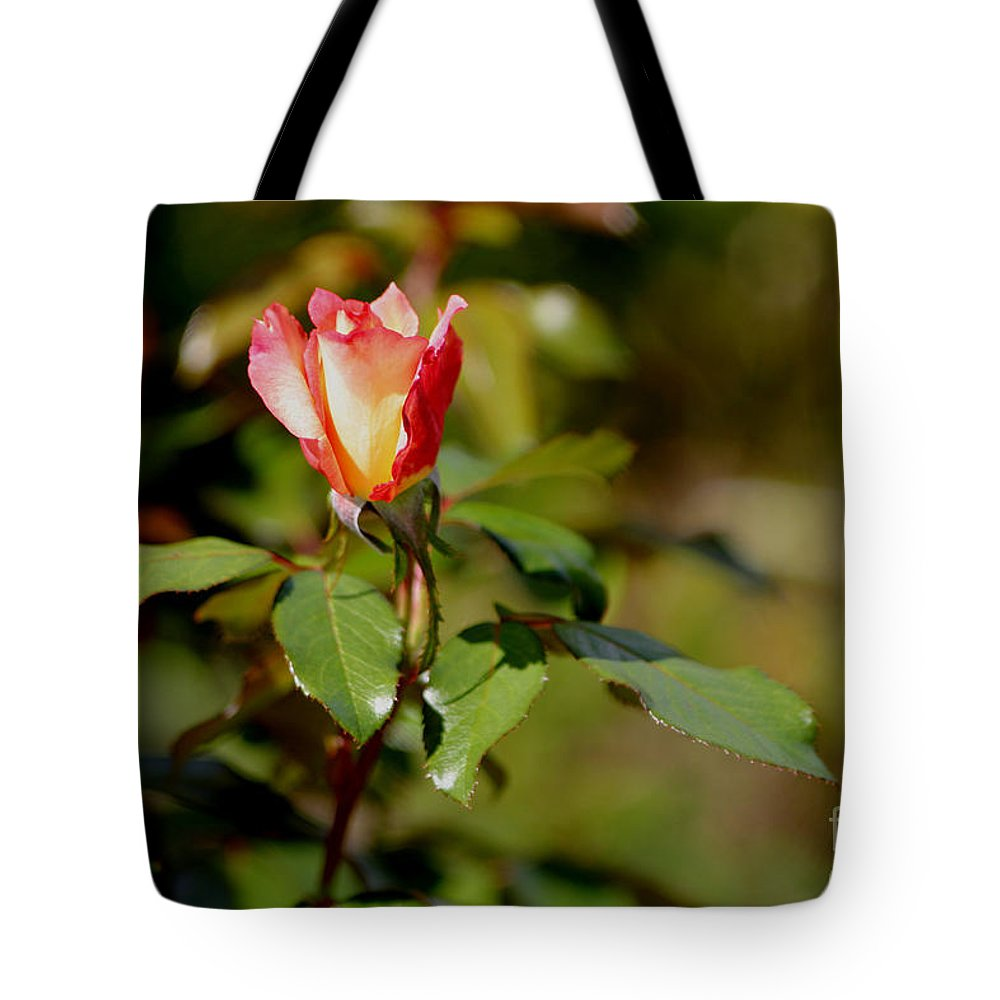 Rose Tote Bag featuring the photograph A Rose For You by Living Color Photography Lorraine Lynch