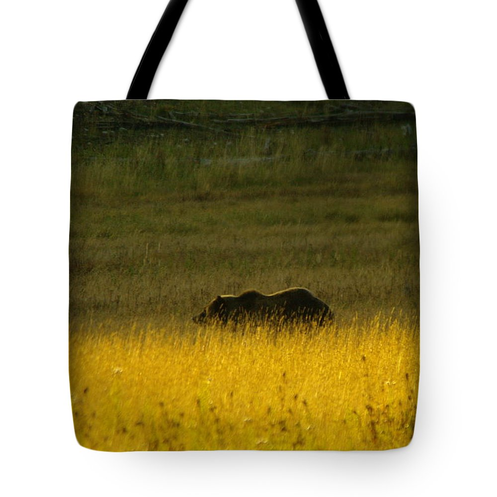Bears Tote Bag featuring the photograph A Silver Back by Jeff Swan