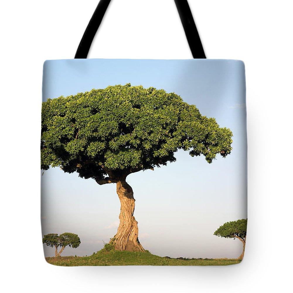 Acacia Tote Bag featuring the photograph Acacia Trees Masai Mara Kenya by Ingo Arndt