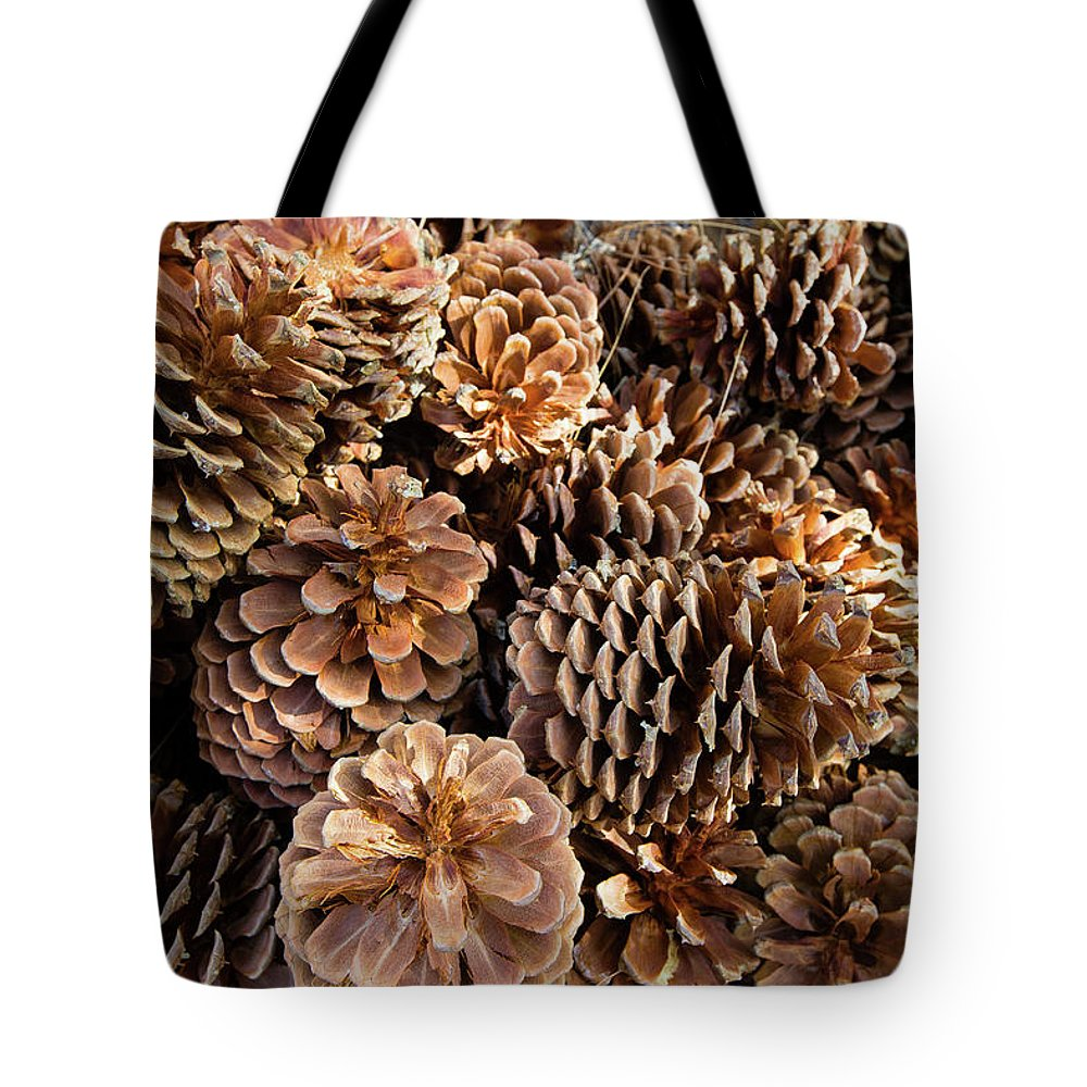 Photography Tote Bag featuring the photograph Acorns Growing On Plants by Panoramic Images