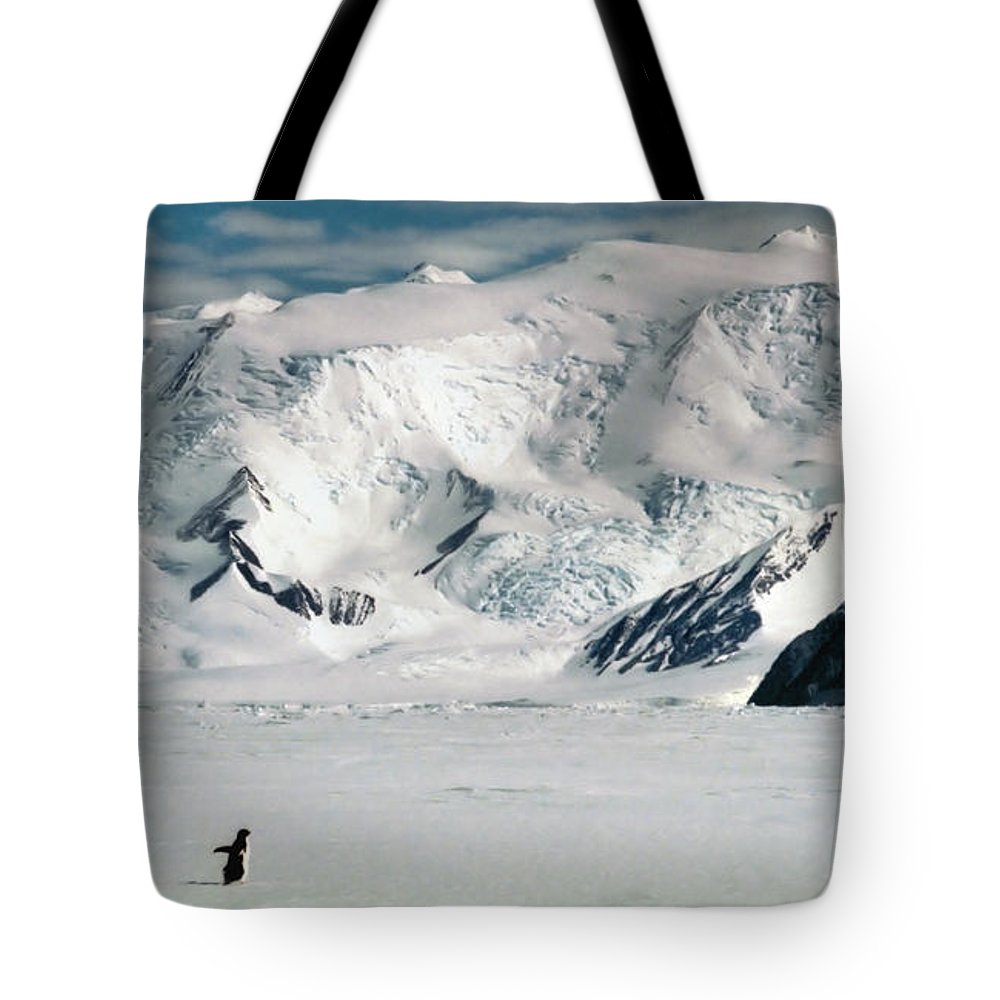 Antarctic Continent Tote Bag featuring the photograph Adelie Penguins At Cape Hallett by Carole-Anne Fooks