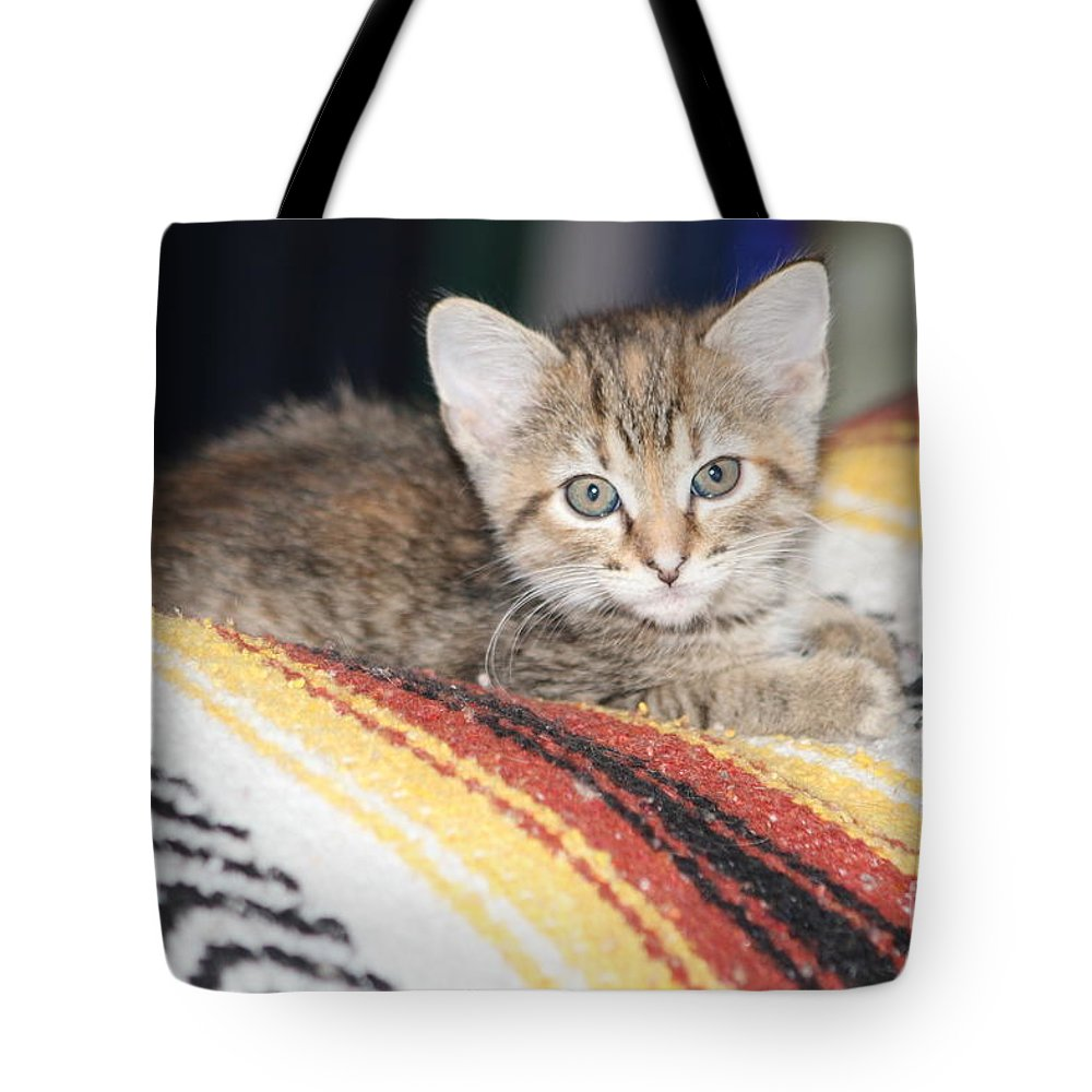 Kitty Tote Bag featuring the photograph Adorable Kitten by Michelle Powell