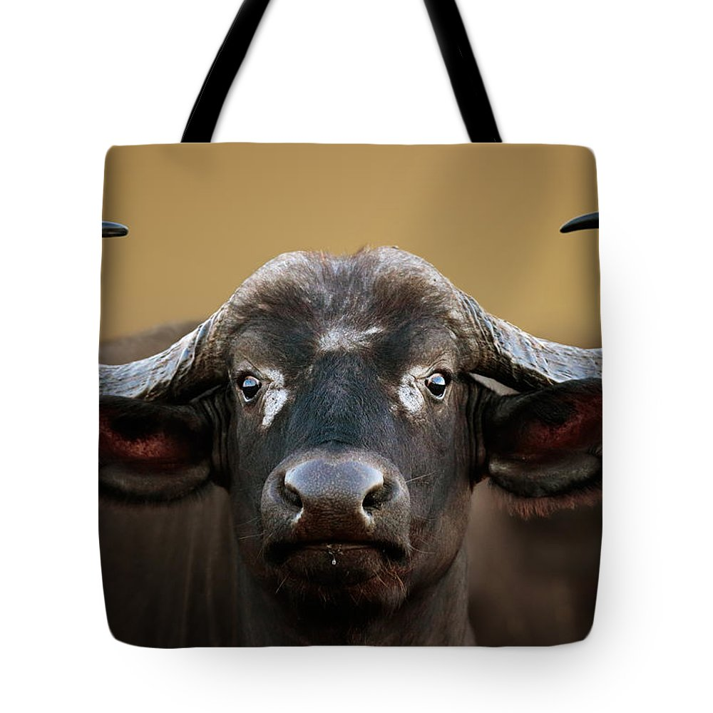 Buffalo Tote Bag featuring the photograph African Buffalo Cow Portrait by Johan Swanepoel