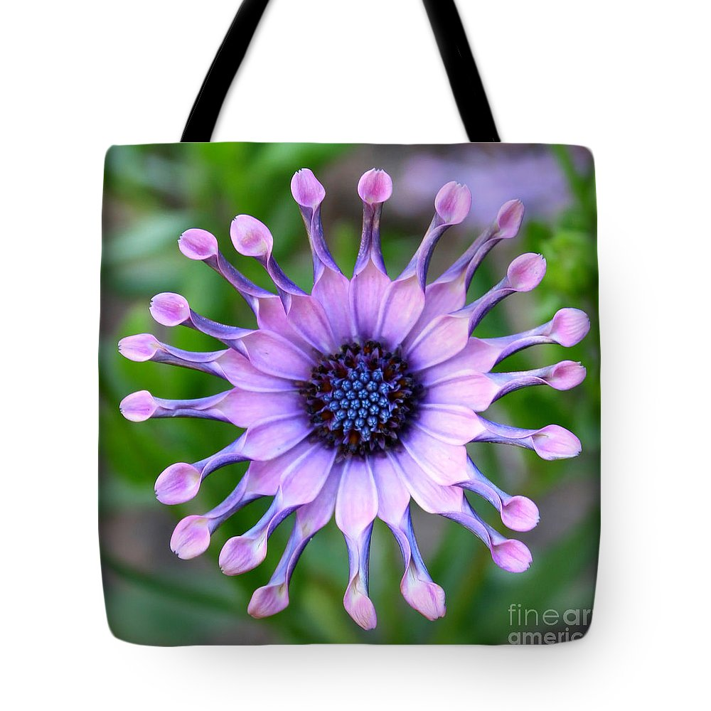 Daisy Tote Bag featuring the photograph African Daisy - Square Format by Carol Groenen