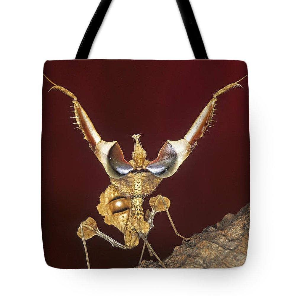Mantis Tote Bag featuring the photograph African Devil Mantis by Francesco Tomasinelli