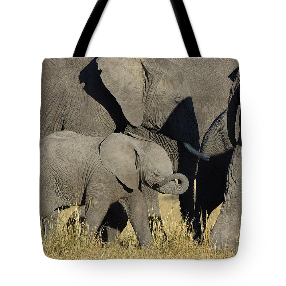 African Elephant Tote Bag featuring the photograph African Elephant Calf With The Herd by Suzi Eszterhas
