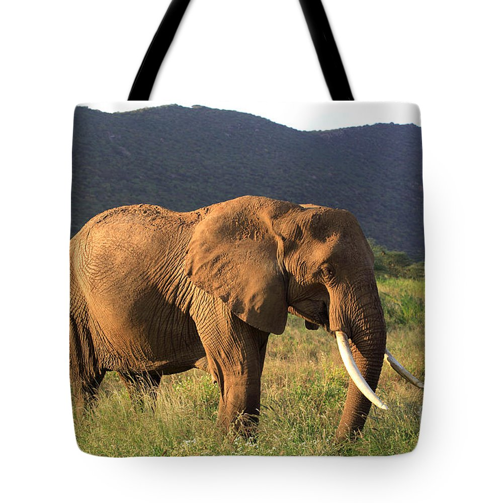 Africa Tote Bag featuring the photograph African Elephant by Deborah Benbrook