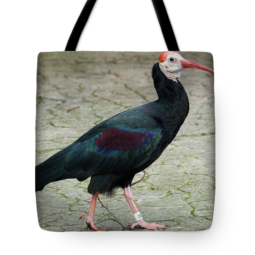 Southern Bald Ibis Tote Bag featuring the photograph Southern Bald Ibis Strutting Around by Jessica Foster