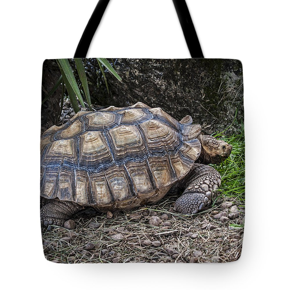 African Spurred Tortoise Tote Bag featuring the photograph African Spurred Tortoise by Arterra Picture Library