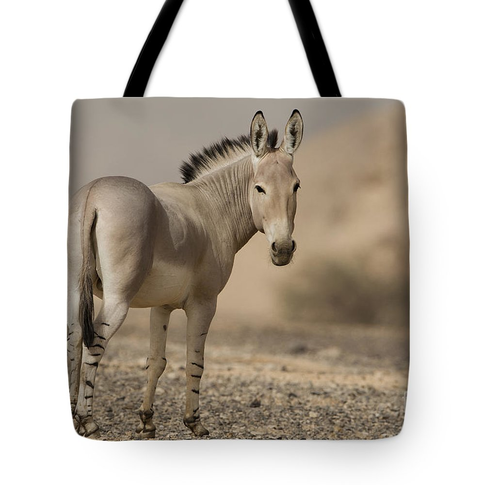 African Wild Ass Tote Bag featuring the photograph African Wild Ass Equus Africanus by Eyal Bartov