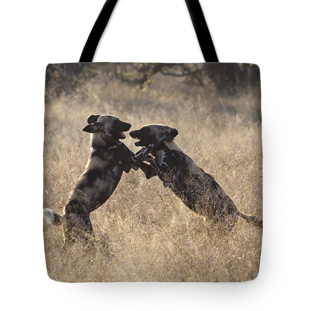 African Wild Dog Tote Bag featuring the photograph African Wild Dogs Playing Lycaon Pictus by Liz Leyden