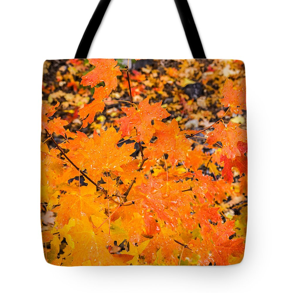 Autumn Tote Bag featuring the photograph After The Rain by Sue Smith