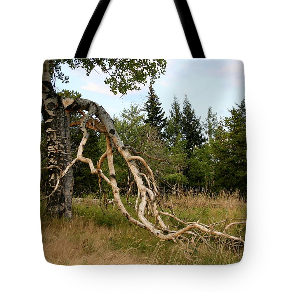 Birch Tree Tote Bag featuring the photograph After The Storm by Betty-Anne McDonald