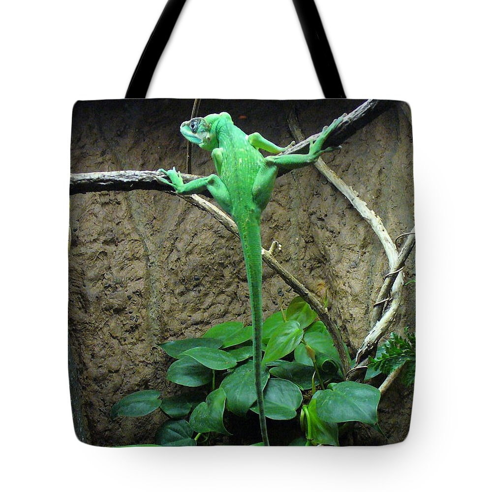 Lizards Tote Bag featuring the photograph Afternoon Workout by Lingfai Leung