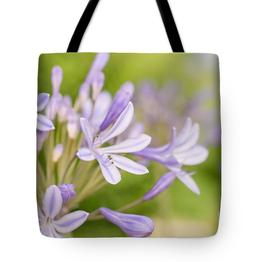 Agapanthus Tote Bag featuring the photograph Agapanthus by Delphimages Photo Creations