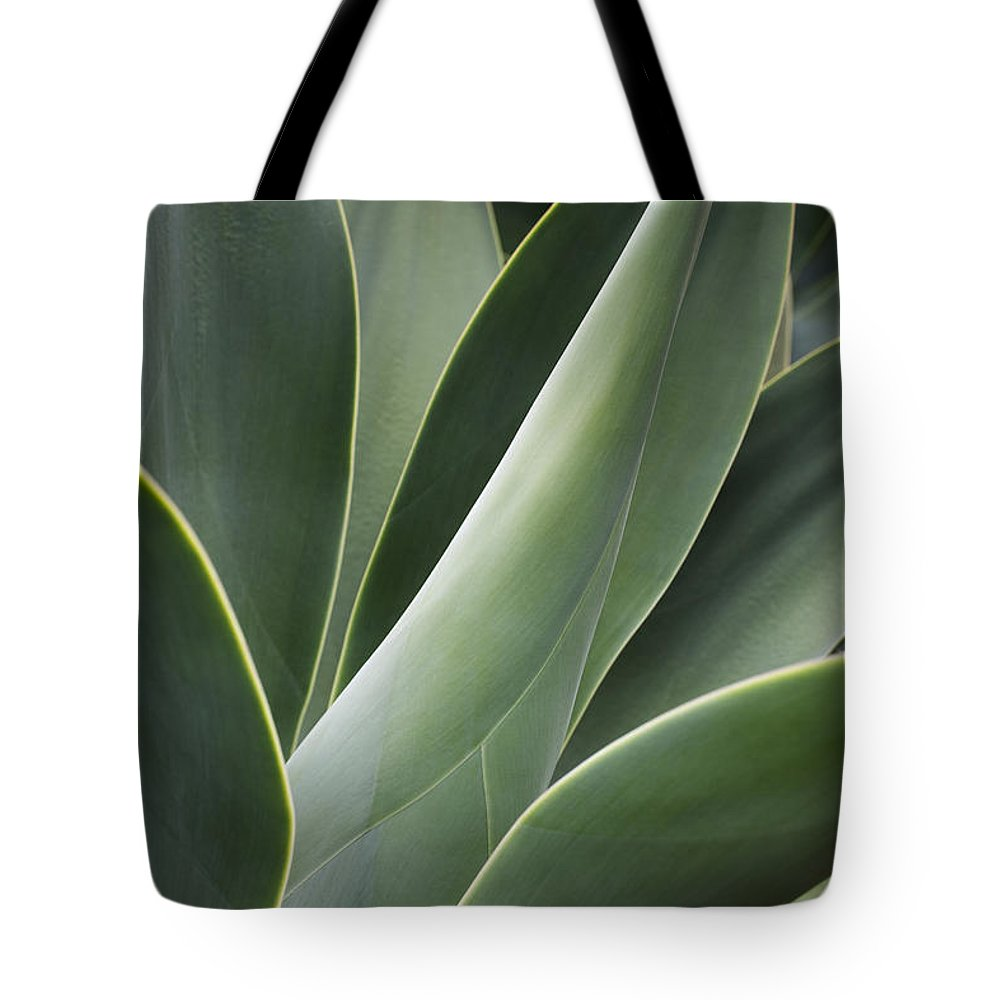 Hawaii Tote Bag featuring the photograph Agave Plant by Charmian Vistaunet
