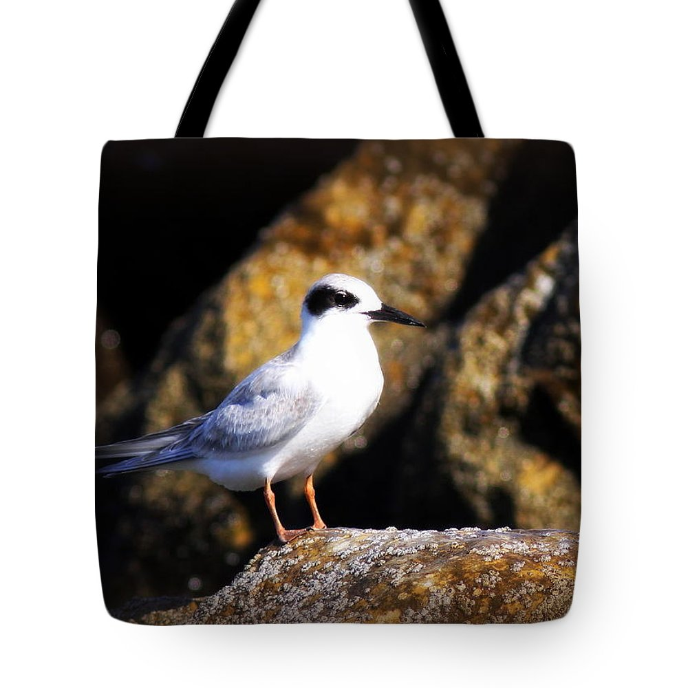 Tern Tote Bag featuring the photograph Alabama Tern by Travis Truelove