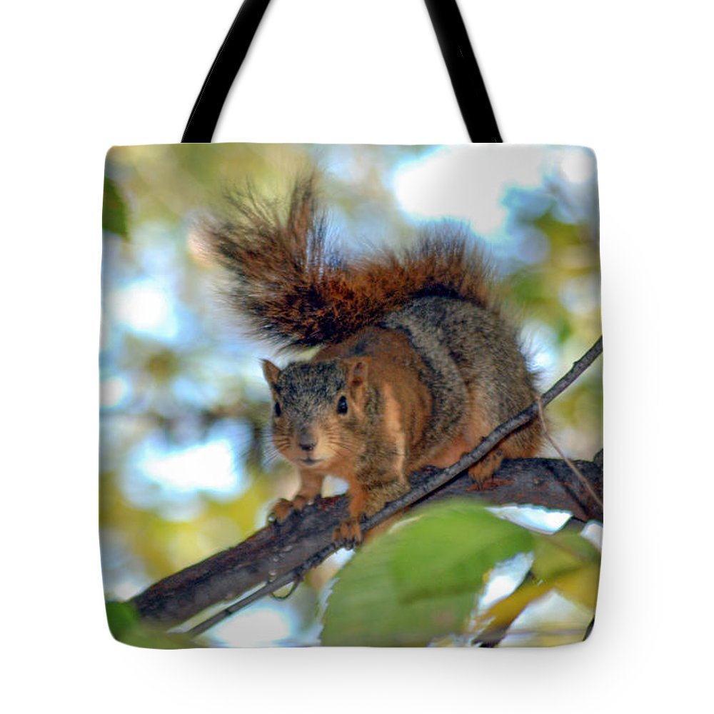 Squirrel Tote Bag featuring the photograph Alarmed by Optical Playground By MP Ray