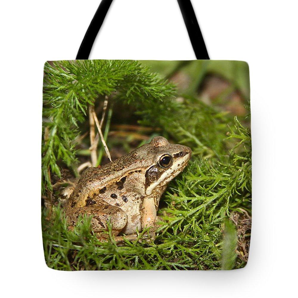 Frog Tote Bag featuring the photograph Alaskan by Rick Monyahan