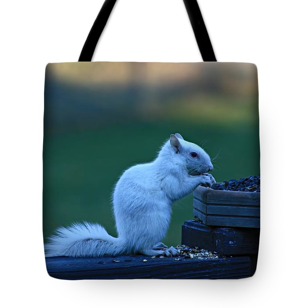 White Squirrel Tote Bag featuring the photograph Albino Squirrel by Amanda Stadther