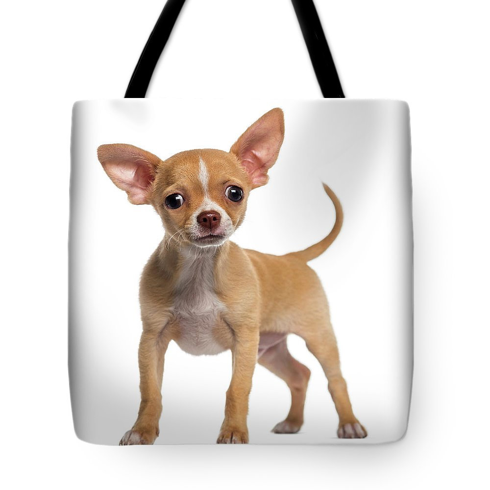 Pets Tote Bag featuring the photograph Alert Chihuahua Puppy 3 Months Old by Life On White
