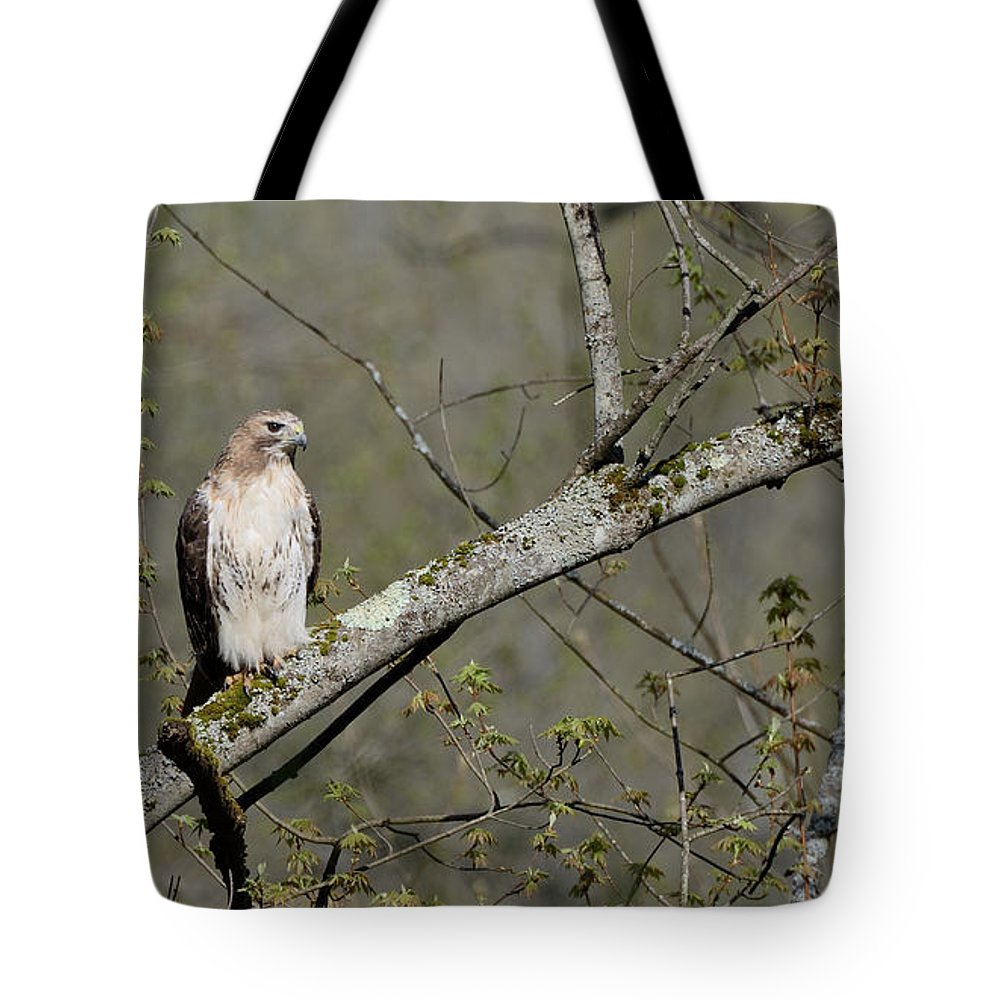 Red-tailed Hawk Tote Bag featuring the photograph Alert by Ian Ashbaugh