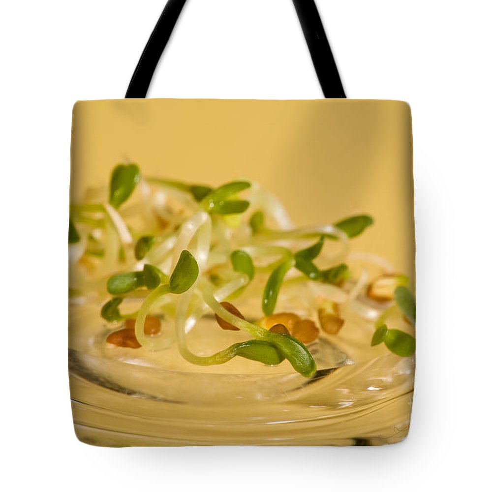 Sprouts Tote Bag featuring the photograph Alfalfa by Iris Richardson