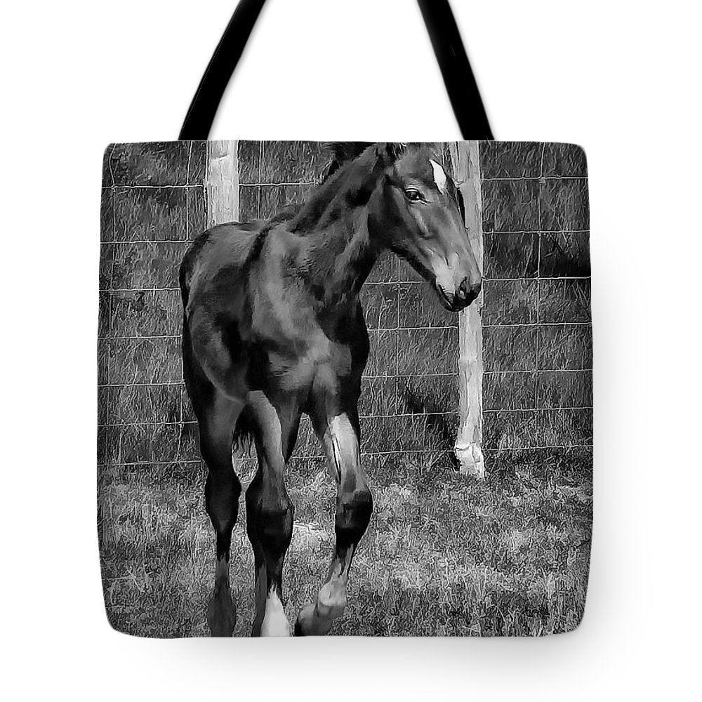 Horse Tote Bag featuring the photograph All Legs Monochrome by Steve Harrington