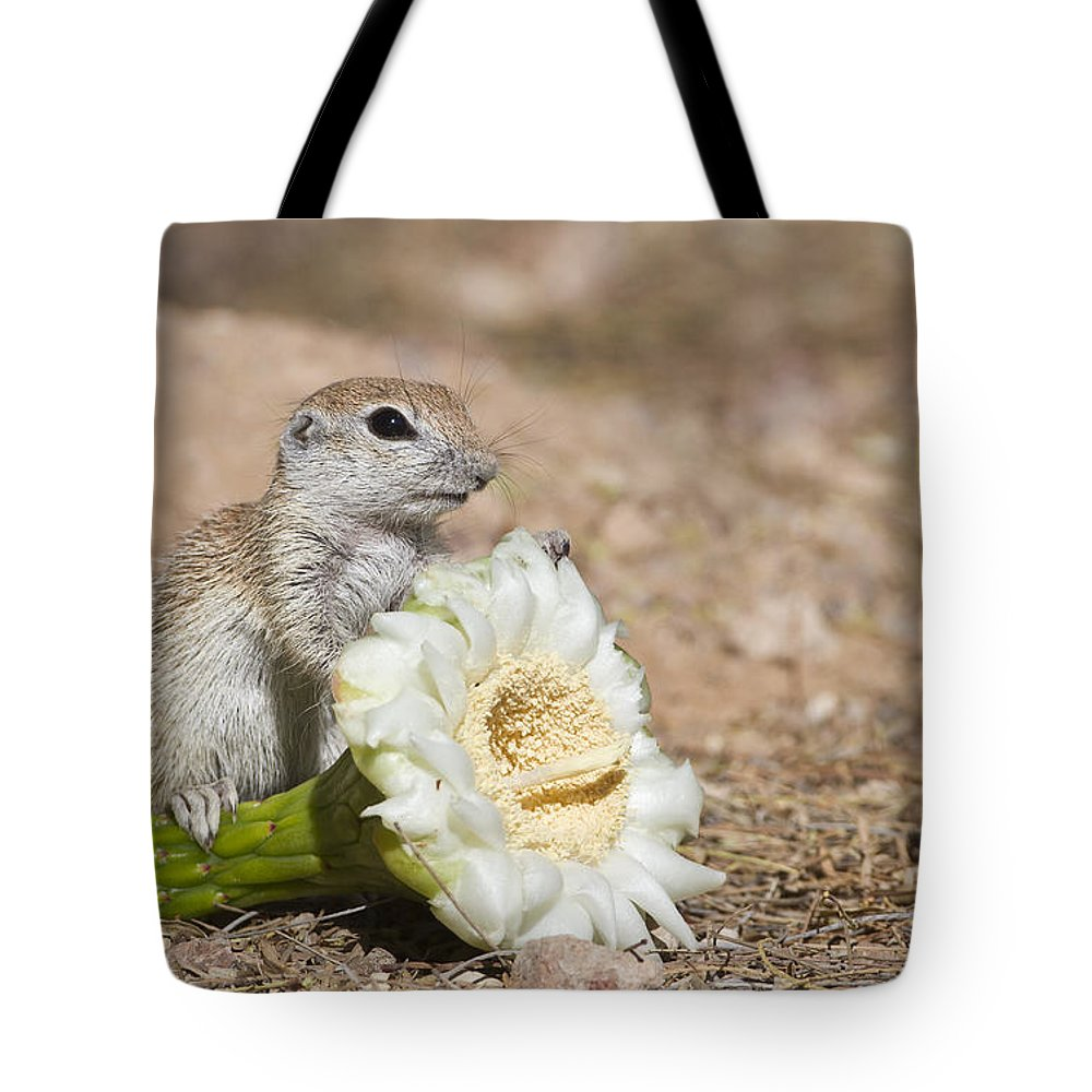 Squirrel Tote Bag featuring the photograph All Mine by Bryan Keil