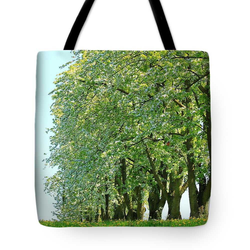 Autumn Tote Bag featuring the photograph Alley Of Trees by Amanda Mohler