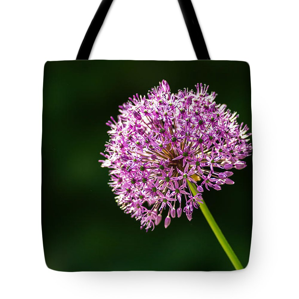 Allium Tote Bag featuring the photograph Allium Flower by Alexander Senin