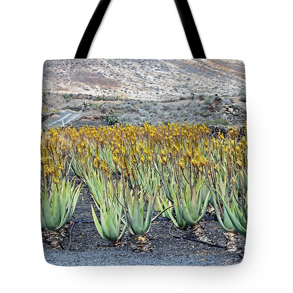 Aloe Vera Plantation Lanzarote Tote Bag featuring the photograph Aloevera Plantation Lanzarote by Tony Murtagh