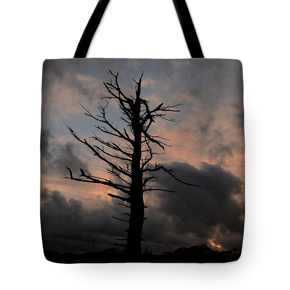 Tree Tote Bag featuring the photograph Alone by Barbara Walsh