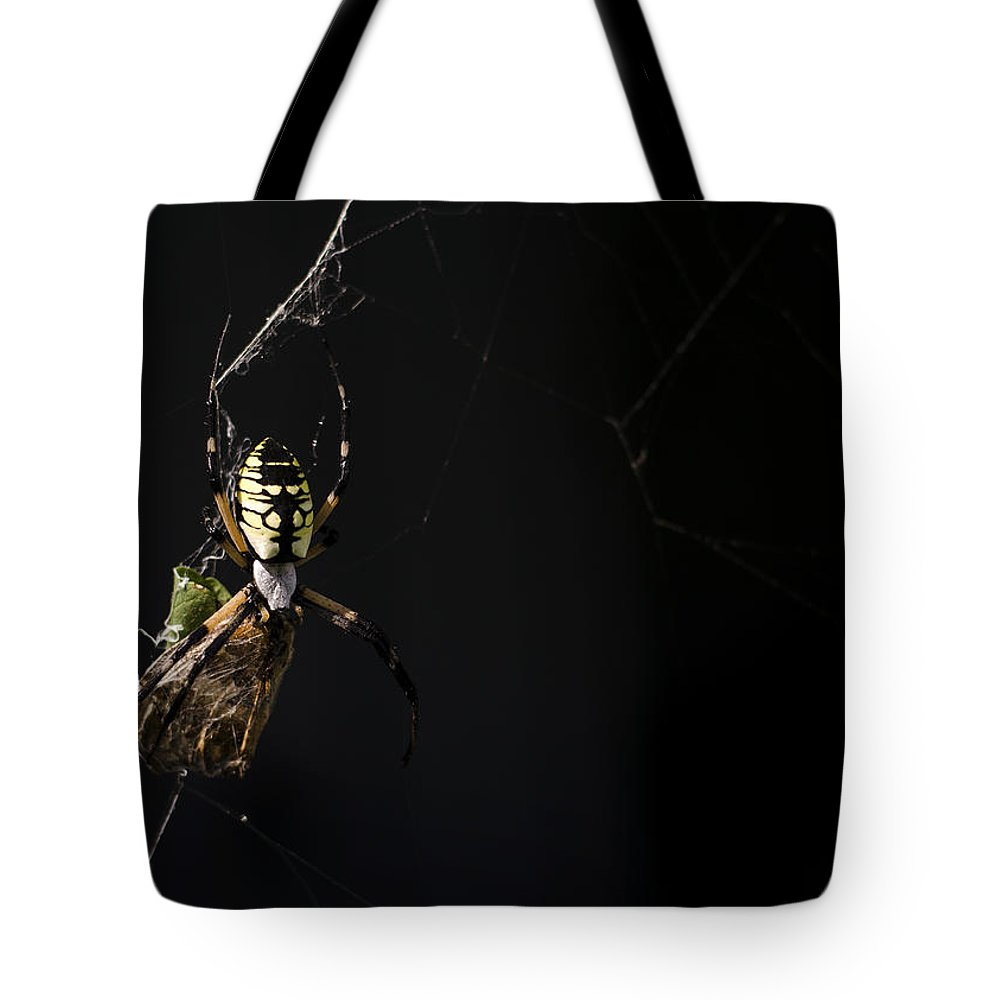 Argiope Aurantia Tote Bag featuring the photograph Along Came A Spider by Heather Applegate