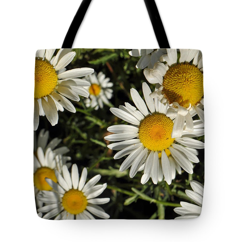 Flower Tote Bag featuring the photograph Alpine Daisies In Glacier National Park by Bruce Gourley