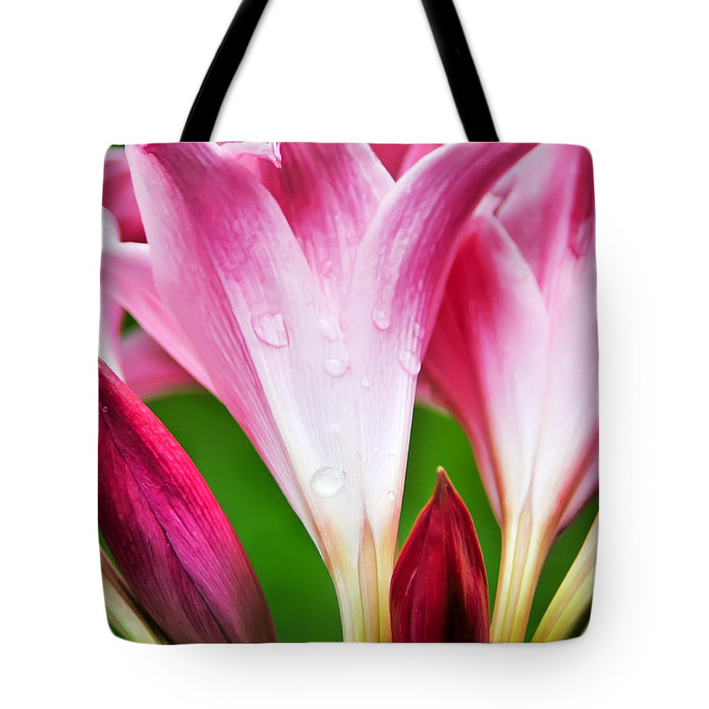 Amaryllis Tote Bag featuring the photograph Amaryllis Flowers And Buds In The Rain by David Perry Lawrence