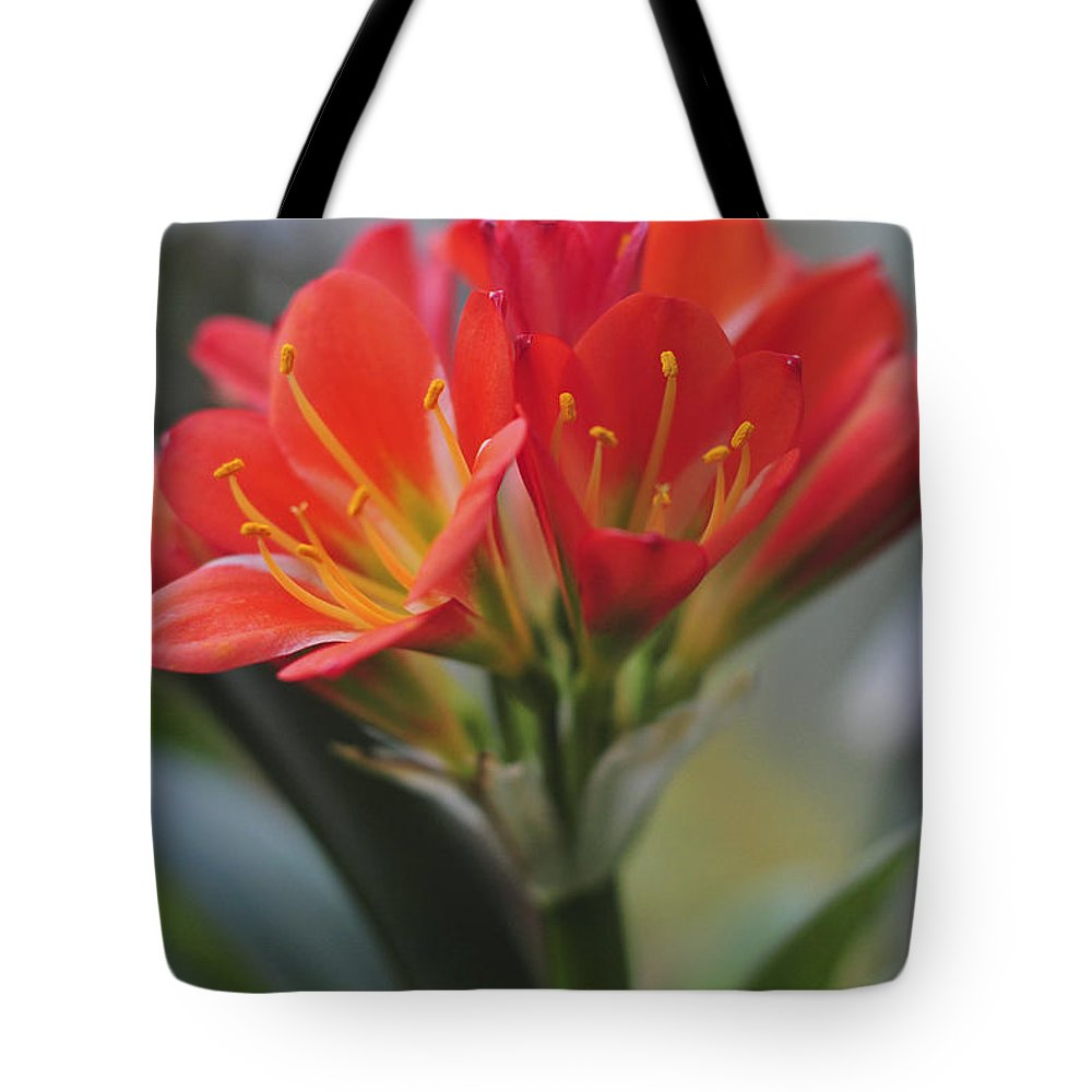 Amaryllis Tote Bag featuring the photograph Amaryllis by Terry DeLuco
