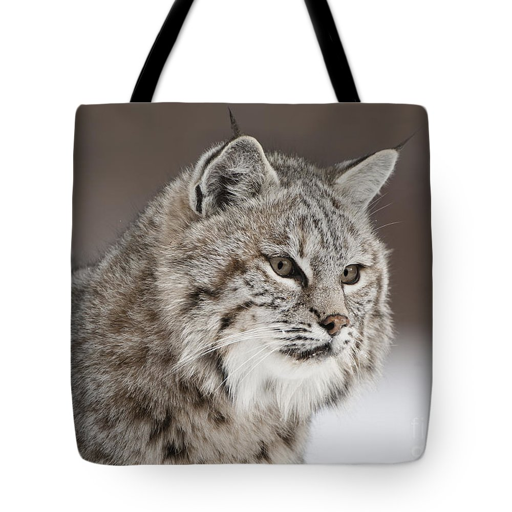 Bobcat Tote Bag featuring the photograph Amazing Gaze by Wildlife Fine Art